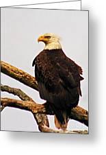 An Eagle's Perch Greeting Card
