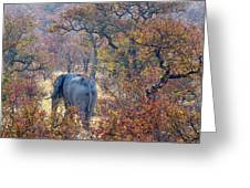 An Elephant Making Its Way Greeting Card