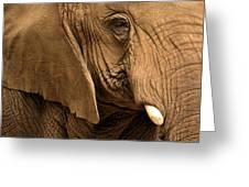 An Elephant's Eye Greeting Card