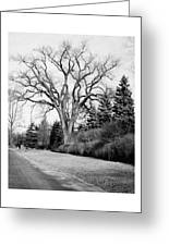 An Elm Tree At The Side Of A Road Greeting Card