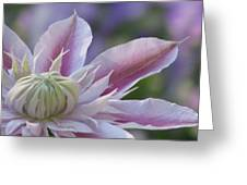 An Exotic Clematis Greeting Card