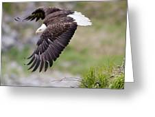An Female Eagle Flys Protectively Over Greeting Card
