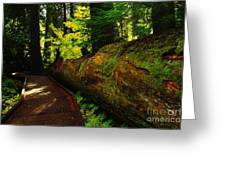 An Old Fallen Tree Greeting Card