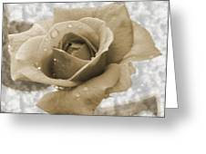An Old Fashion Rose Greeting Card