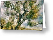 An Old Olive Grove Greeting Card