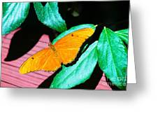 An Orange Butterfly Greeting Card