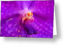 An Orchid's Delicates Greeting Card