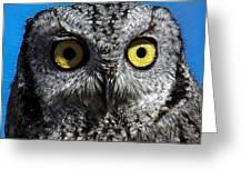 An Owl Greeting Card