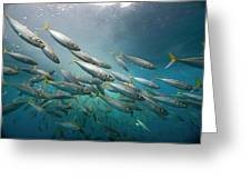 An Underwater View Of Schooling Fish Greeting Card