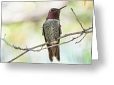 Ana Hummingbird Greeting Card