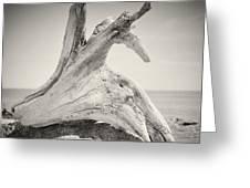 Analog Photography - Driftwood Greeting Card