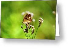 Anartia Jatrophae Greeting Card