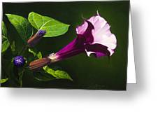 Anastacias Datura Greeting Card