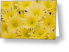 Anastasia Sunny Greeting Card