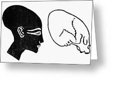 Anatomy: Human Cranium Greeting Card