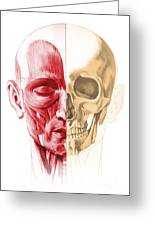 Anatomy Of A Male Human Head, With Half Greeting Card by Leonello Calvetti