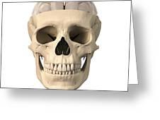 Anatomy Of Human Skull, Cutaway View Greeting Card