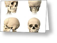 Anatomy Of Human Skull From Different Greeting Card by Leonello Calvetti