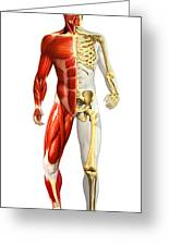 Anatomy Of Male Body With Half Skeleton Greeting Card