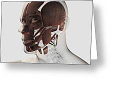 Anatomy Of Male Facial Muscles, Side Greeting Card
