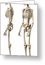 Anatomy Of Male Human Skeleton, Side Greeting Card