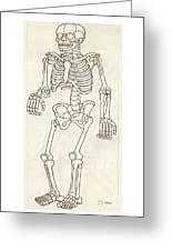 Anatomy Scrolls - Front Greeting Card