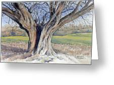 Ancient English Tree Greeting Card