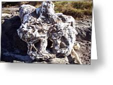 Ancient Gnarled Driftwood - Oregon Beach Greeting Card