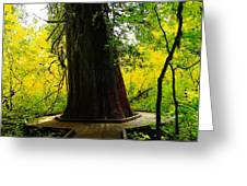 Ancient Old Growth Greeting Card