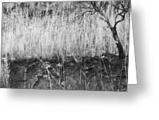 Ancient Sagebrush 2 Greeting Card