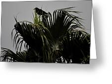 And A Crow Oh Oh In A Palm Tree Greeting Card