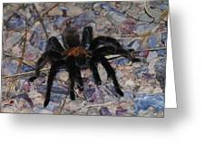 And Along Came A Little Spider .  Greeting Card
