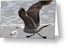 And Fly Greeting Card