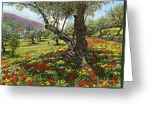Andalucian Olive Grove Greeting Card