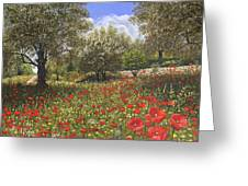 Andalucian Poppies Greeting Card