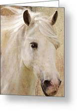 Andalusian Dreamer Greeting Card