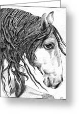 Andalusian Horse Greeting Card