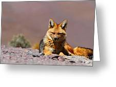Andean Fox Portrait Greeting Card