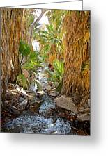 Andreas Creek In Andreas Canyon In Indian Canyons-ca Greeting Card