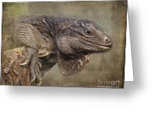 Anegada Ground Iguana - Houston Zoo Greeting Card