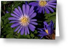 Anemone Blanda Blue Greeting Card