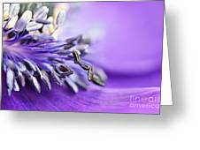 Anemone Flower Close Up Greeting Card