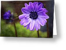Anemone Kissed Greeting Card