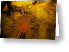 Anemone Three Greeting Card