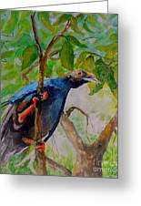 Angel Bird Of  North Moluccas Greeting Card