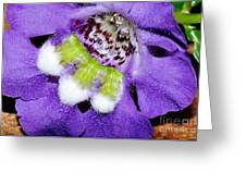 Angel Face Blue - With Extra Petals And 3 Stamen Greeting Card