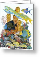 Angel Fish Reef Greeting Card