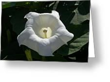 Angel Glow Greeting Card