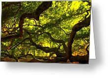 Angel Oak Limbs Crop 40 Greeting Card