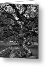 Angel Oak Tree 2 Greeting Card